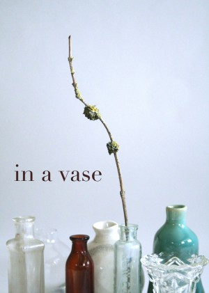 Post image for 'in a vase'